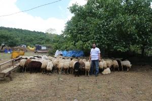 adak keçi satış yerleri