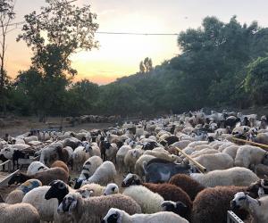 Ümraniye Kazımkarabekir Mahallesi Kurban Satış ve Ücretsiz Kesim