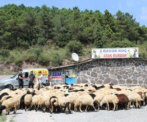 Kadıköy Adak Fiyatları